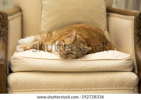 A shot of a Fat Ginger Cat resting - stock photo