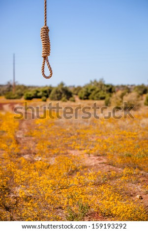 A shot of a field of yellow flowers with a hangman noose in the foreground. - stock photo