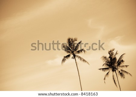 A shot of a pair of palm or coconut trees - stock photo