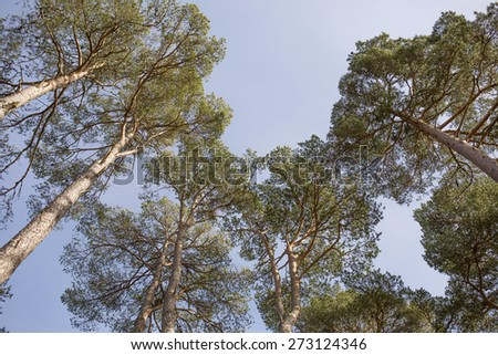A shot of a Vibrant tree conopy - stock photo