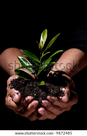A shot of hands holding a new plant, symbolizes new life and save the tree concept - stock photo