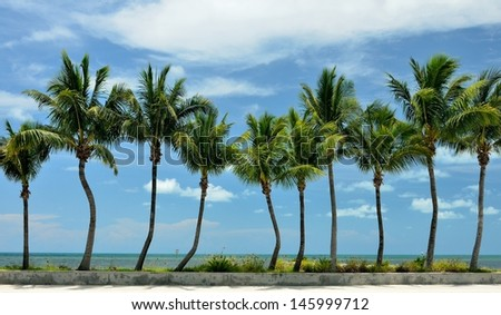 A sidewalk, seawall and row of palm trees in front of the Atlantic Ocean in Key West, Florida - stock photo