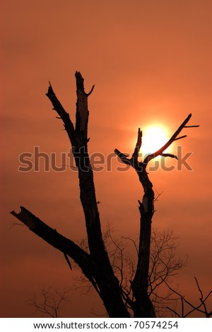 A silhouette of a dead tree against the sunset - stock photo