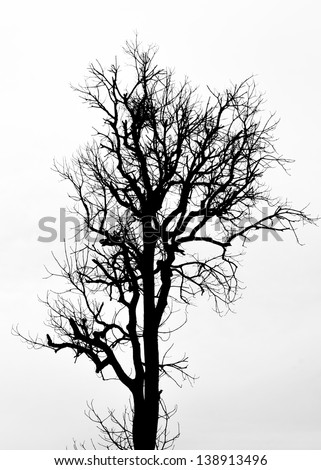 A silhouette tree is isolated on white background