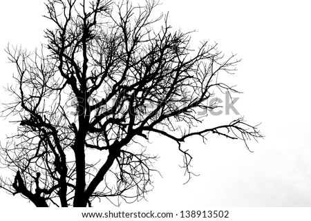 A silhouette tree is isolated on white background - stock photo