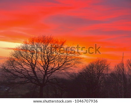 A silhouetted tree in a sunset sky of reds and oranges over Herefordshire, England, UK. White balance adjusted for strong colour.