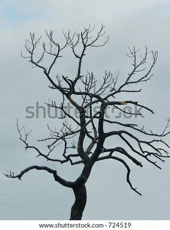 A single, bare dead tree  silhouetted against a gray sky. The stark, gnarled branches look eerie, scarey or spooky. Vertical image would be great for Halloween or loneliness concept. - stock photo