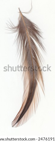 a single feather on white background - stock photo
