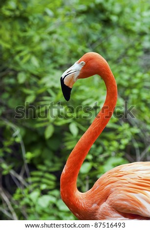 A single flamingo against a lush green background.