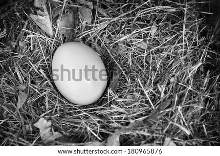 A single fresh egg sits in a natural nest in black and white - stock photo