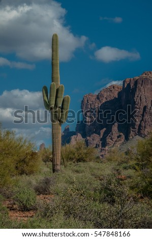 A single large saguaro cactus stands near the Superstition Mountains on a sunny day in the Sonoran Desert in Arizona.