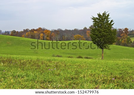 A single pine tree against a rolling green hill Autumn landscape in North West New Jersey. - stock photo