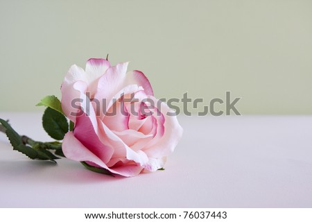 A single pink rose laying on a table. - stock photo