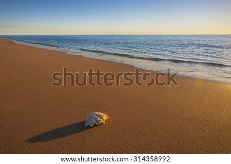 A single sea shell casts a long shadow on a deserted beach at sunset. - stock photo
