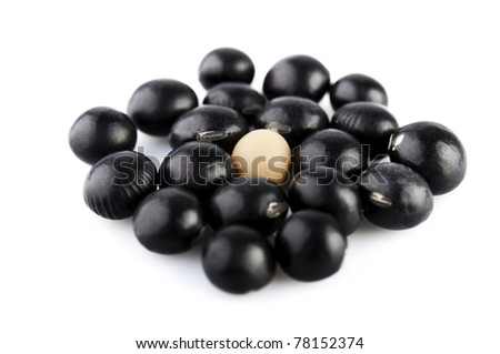 A single soy bean among black beans - stock photo