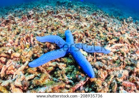 A single starfish sites on a destroyed coral reef.  Global warming and illegal dynamite fishing are having a huge negative effect on coral reefs - stock photo