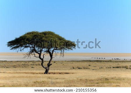 A single tree in front of a nearly endless salt pan with some wildebeest on it. - stock photo