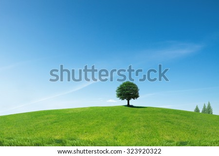 A single tree standing alone with blue sky and grass. - stock photo