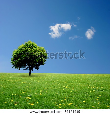 A Single Tree Standing Alone with Blue Sky and Grass - stock photo
