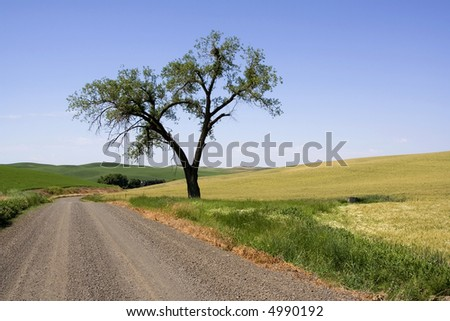 A single tree stands sentinel on this dirt road in farm country on the Palouse - stock photo