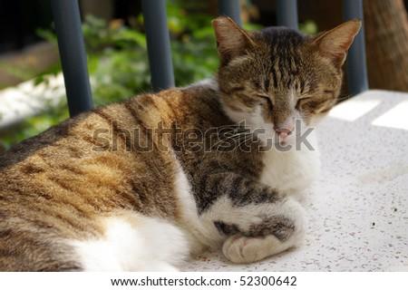 A sleepy cat - stock photo