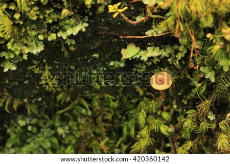 A small brown mushroom growing out from the moss and lichen.  - stock photo