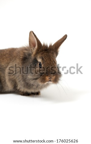 A small brown rabbit sits in a white room.