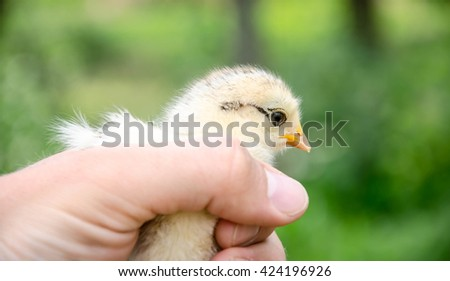 A small chick on the palm