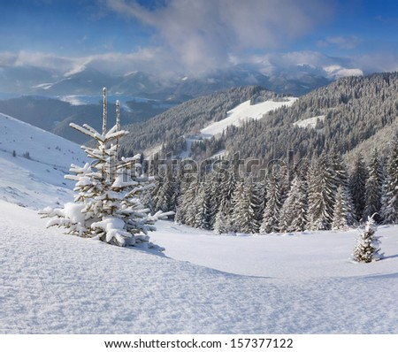 A small Christmas tree covered with snow in the winter mountains - stock photo