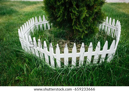 A Small Christmas Tree Planted On A Lawn And Fenced With A White Fence.  Photography