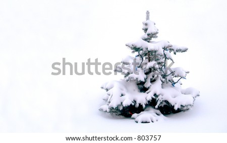A small Christmass Tree, covered in snow.