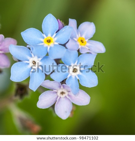 A small collection of pretty forget me nots!