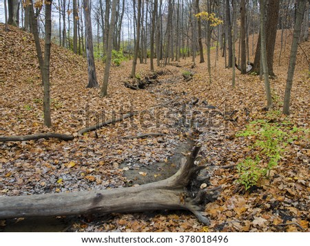 A small creek bed is nearly dry in the autumn forest at Hammel Woods Forest Preserve in Will County, Illinois