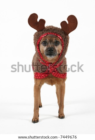a small dog dressed up as a reindeer - stock photo