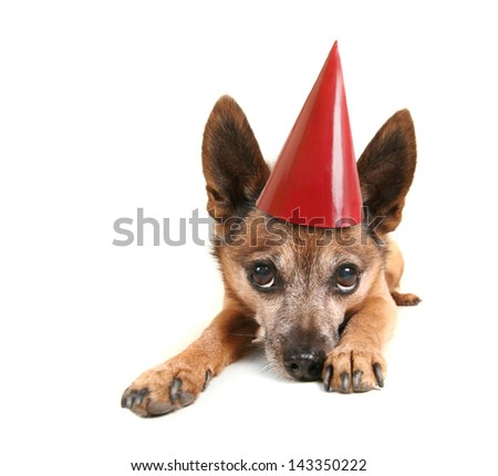 a small dog laying down and pouting with a birthday hat on - stock photo