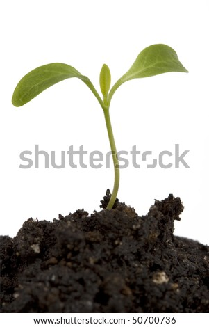 A small growing plant - stock photo