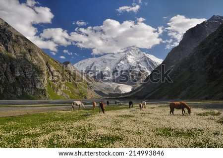 A small herd of horses grazing near Issyk-Kul Lake in Kyrgyzstan  - stock photo