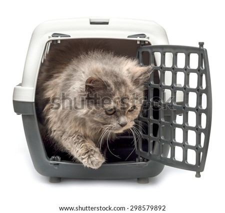 A small kitten looks with cells for carrying and transport of animals isolated on white background - stock photo