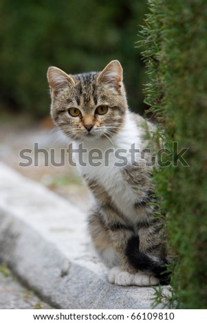 A small kitten sits on the roadside - stock photo