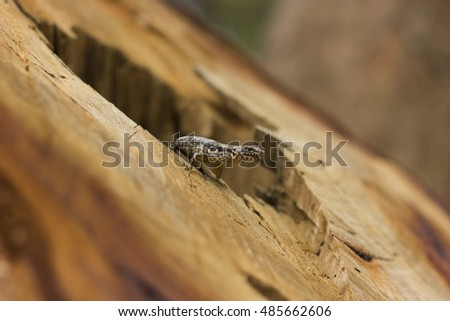 A small lizard emerging from inside a felled tree with foreground and background blurred. Concept: Bokeh, Nature, Deforestation, Ecosystem