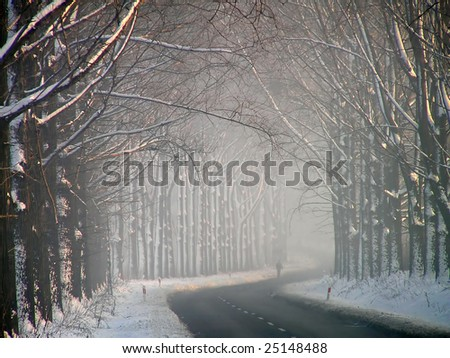 A small man among the great avenue of trees. - stock photo
