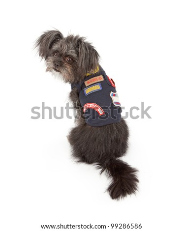 A small mixed breed dog wearing a Dog Scouts outfit that is similar to a Cub or Boy Scout vest - stock photo