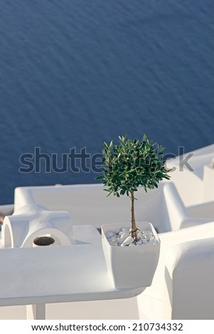 A small olive tree in a flower pot on the background of blue sea, Santorini, Greece - stock photo