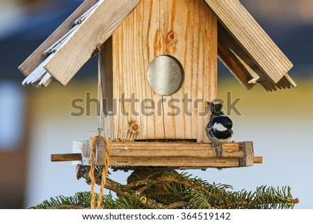 A small passerine bird, Coal tit (Periparus ater) eating hemp seeds on the wooden bird feeder in the winter in Austria - stock photo