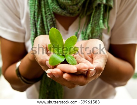 A small plant in a women's hand. - stock photo