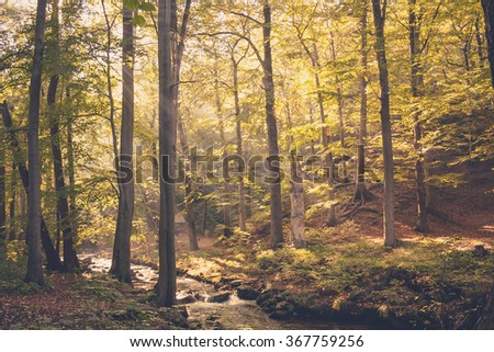 a small river flows through a green and healthy forest flooded with golden sunlight. - stock photo