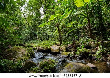 a small river in the green dense jungle in Costa Rica - stock photo