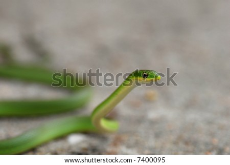 A small rough green snake against a grey stone background. - stock photo