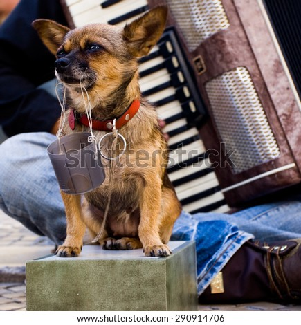 A small sad dog collecting money for a street musician - stock photo