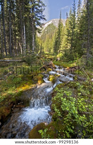 A small stream that flows out of Tryst Lake, Spray Lake Valley, approximately 50 miles south of Canmore, Alberta, Canada. - stock photo